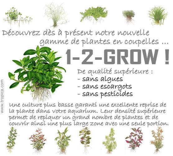 Découvrez dès à présent notre nouvelle gamme de plantes en coupelles ... 1-2-GROW !  De qualité supérieure : - sans algues - sans escargots - sans pesticides  Une culture plus basse garanti une excellente reprise de la plante dans votre aquarium. Leur densité végétale supérieure permet de repiquer un plus grand nombre de plantes et de couvrir ainsi une plus large zone avec une seule portion.