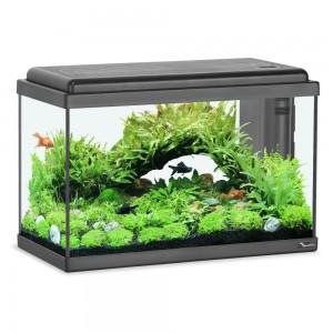 décoration aquarium 40 litres