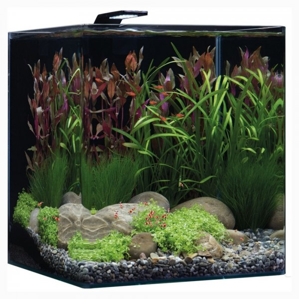 aquarium dennerle nanocube basic 60 l. Black Bedroom Furniture Sets. Home Design Ideas