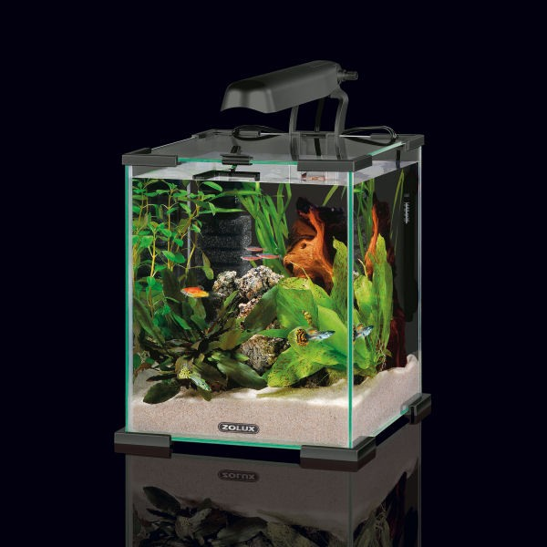 aquarium 10 litres aquarium 10 litre sur enperdresonlapin. Black Bedroom Furniture Sets. Home Design Ideas