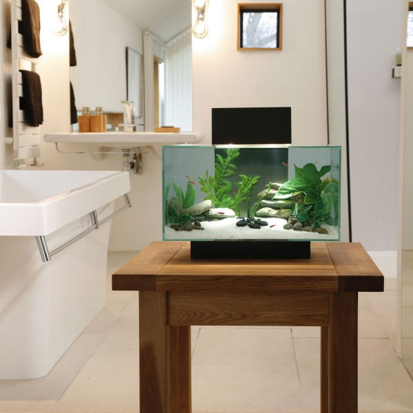 Le bon coin aquarium 28 images d 233 coration aquarium for Table exterieur le bon coin