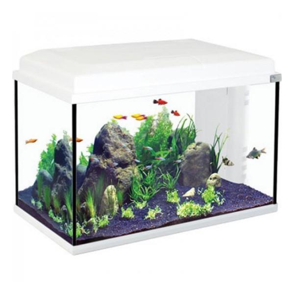 décoration aquarium aquatlantis