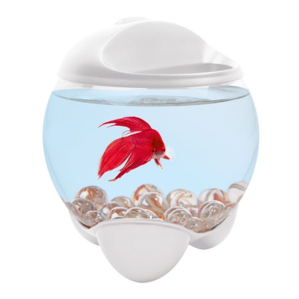 aquarium tetra betta bubble blanc pour poisson combattant. Black Bedroom Furniture Sets. Home Design Ideas
