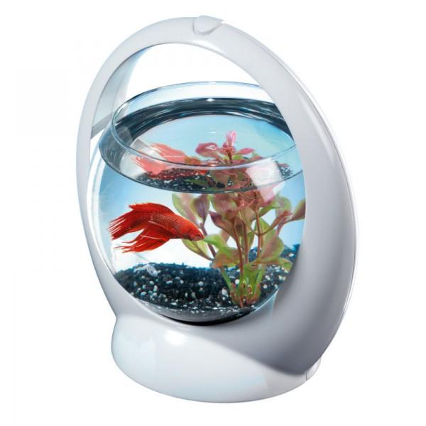Aquarium tetra betta ring pour poisson combattant for Petit aquarium rond