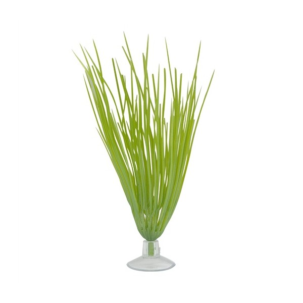 Marina betta plante herbe haute pour combattant for Plante haute