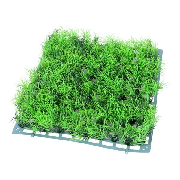 Plantes D Coratives Tapis Herbe Verte Pour Aquarium