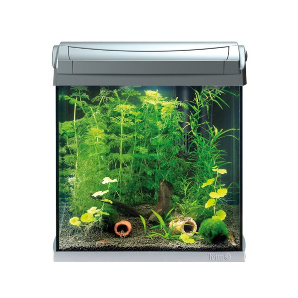 Aquarium 30l for Aquarium 30l combien de poisson rouge