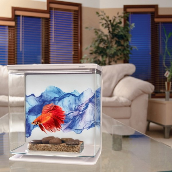 marina betta kit 3l voile bleu aquarium pour combattant. Black Bedroom Furniture Sets. Home Design Ideas